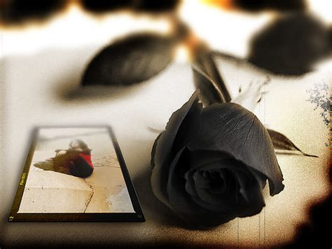 rosa nera fiore la rosa nera penna in fiamme