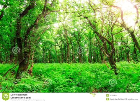 view of forest habitat royalty free stock photograph in summer forest stock image image of burst concept