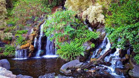 Los Angeles County Arboretum Botanic Garden Arcadia Ca Manfred Meyberg Waterfall Yelp