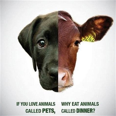 why is my dog not eating what you need to know if you love animals called pets why eat animals called