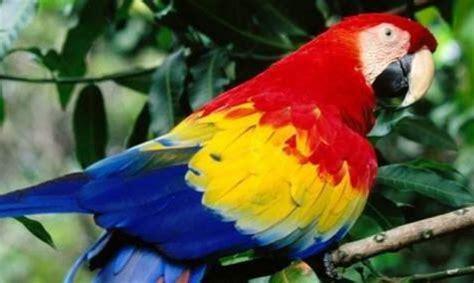 imagenes animales con plumas por qu 233 los loros se arrancan las plumas 161 desc 250 brelo
