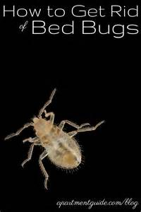 how to get rid of bed bugs at home how to get rid of bed bugs apartmentguide