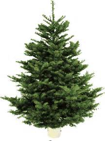 Which Christmas Trees Smell The Most » Ideas Home Design
