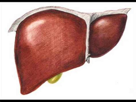 vasco fegato spappolato fegato fegato spappolato vasco