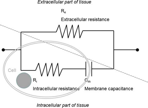 electrical properties of resistors the simplified equivalent three element electrical circuit model for