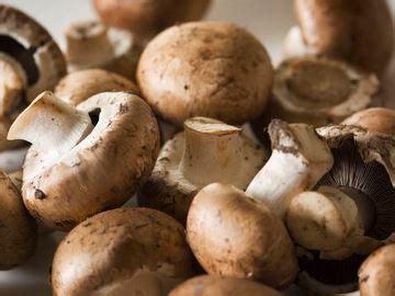 intip yuk jenis jenis jamur  bisa dimakan