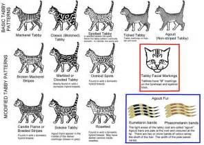 cat color patterns 173 173 173 173 173 173 173 173 173 173 173 173 173 173 173 173 173 173 173 173 173 173 173 173 173 173 173 173 173 173 173 173 173