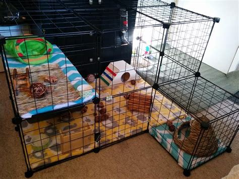 what do i need to build a house 17 best ideas about rabbit cages on pinterest indoor