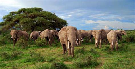 Travel Review: Luxury Africa Family Safari, Botswana