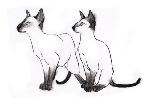 Siamese Cat Drawings - ClipArt Best Free Clipart Of Siamese Cats
