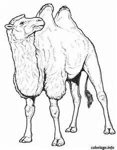 coloriage dessin de chameau dessin