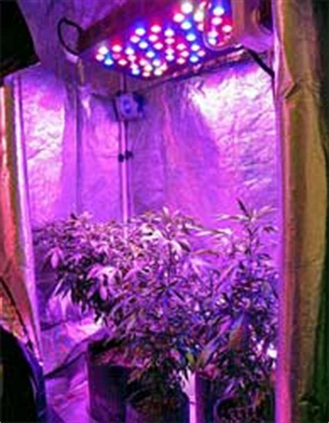 can you grow with a black light which room in the house is best for growing grow