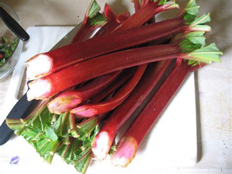 rhabarber englisch rhubarb wiktionary