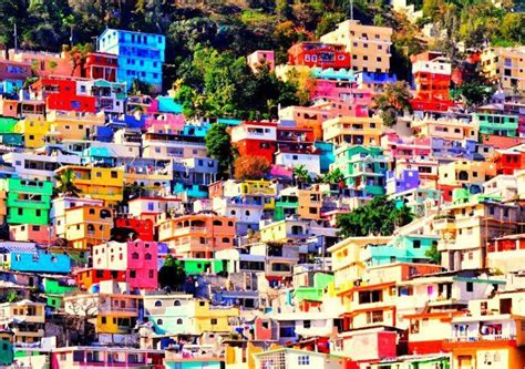 jalousie haiti haiti aiming to plant 1 2 million trees in a single day