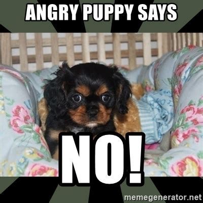 Angry No Meme - angry puppy says no angry puppy meme generator