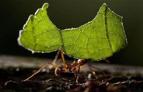 leaf cutter ant fungus gardens transform during biomass degradation