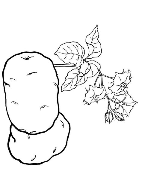 potato coloring pages download and print potato coloring