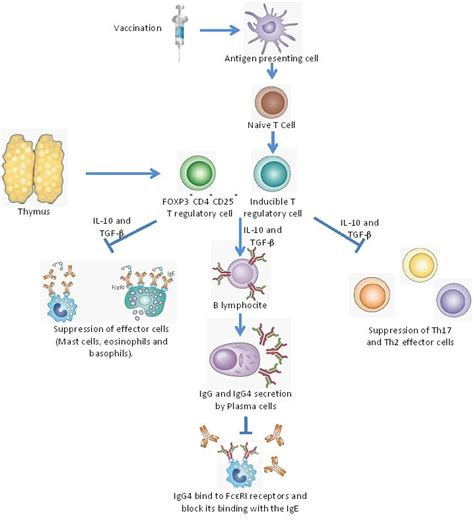 mechanisms of allergen specific immunotherapy from molecular cloning to vaccine development for allergic