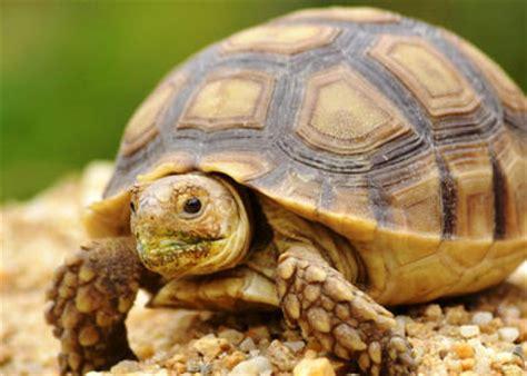 imagenes de tortugas blancas las tortugas todo lo que necesitas saber sobre ellas