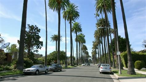 4k uhd palm trees in tropical beverly hills los angeles california stock footage video