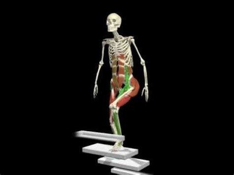 What Muscles Do Stair Steppers Work by Similiar Muscles Worked Climbing Stairs Keywords