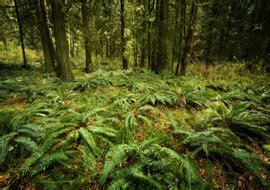 Plants That Live In The Forest Floor by The Diverse Plants And Animals Of The Tropical Rainforest