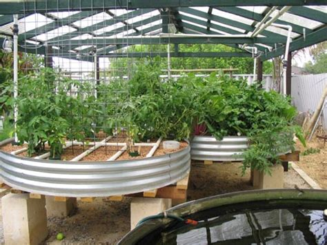 backyard aquaponic systems