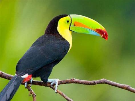Imagenes De Animales Vertebrados Aves | las aves escolar series elpopular pe