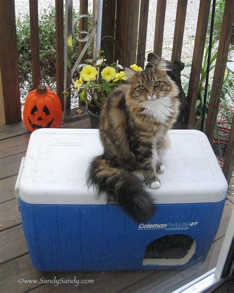 best 25 outdoor cat shelter ideas on outdoor