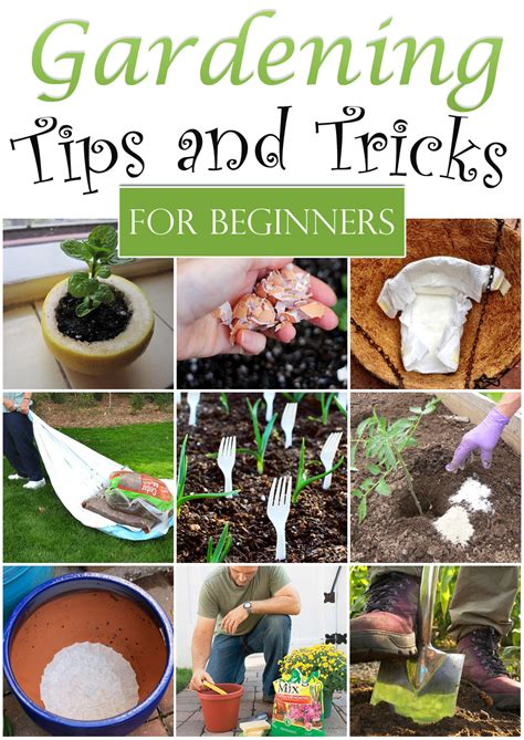 garden tips 10 clever gardening tips and tricks for beginners