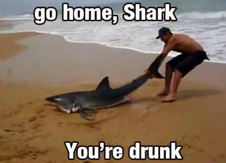 go home shark you re
