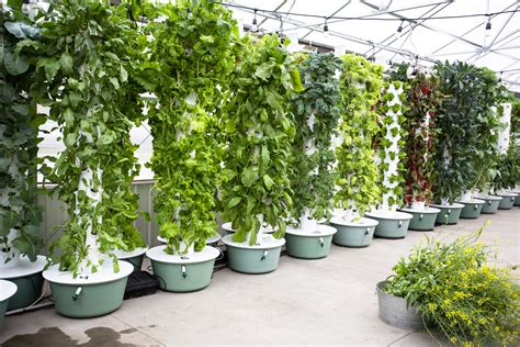 hydroponic towers whats  deal complete hydroponics