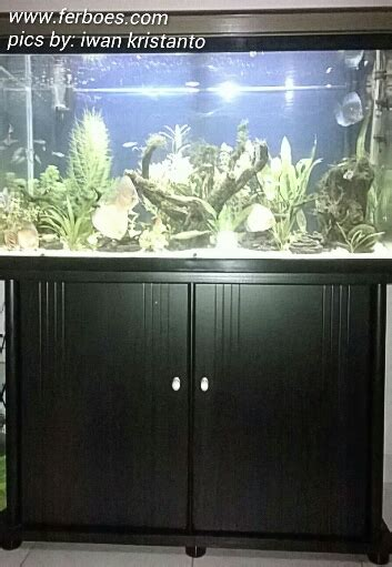 Lu Tl Untuk Aquarium Aquascape For Discus Ferboes