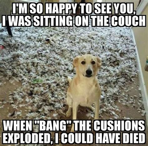 Silly Animal Memes - funny animal pictures of the day 24 pics funny animal