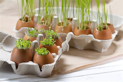 how to grow fresh herbs in your kitchen how to grow your own herbs on your kitchen counter food