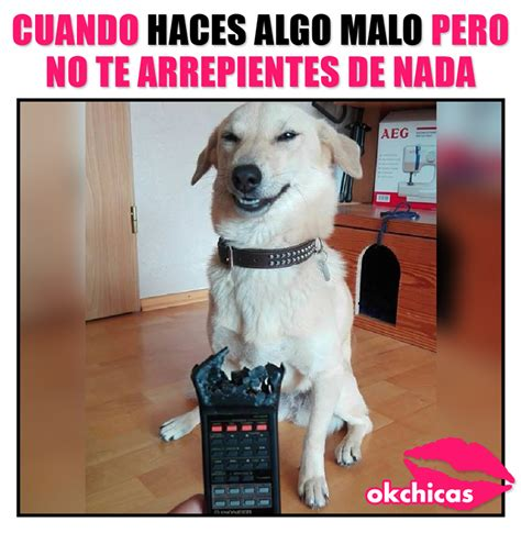okchicas imagenes graciosas 20 divertidos memes de perros que te har 225 n llorar de risa