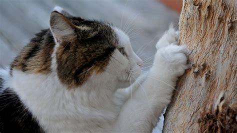 eliminare i gatti dal giardino il nostro micio ama farsi le unghie ecco perch 232 gattissimi