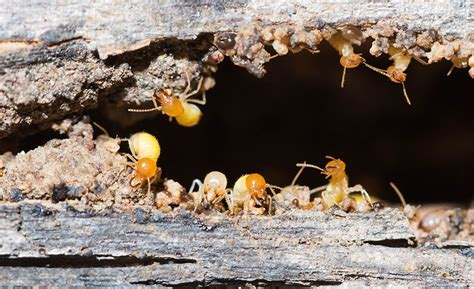 Meaning Of Pile Of Termites
