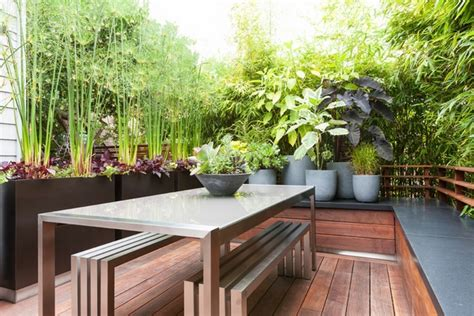 Balcony Screening Plants by Best Screening Plants 20 Plants To Protect Your Privacy