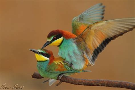 alimento  aves