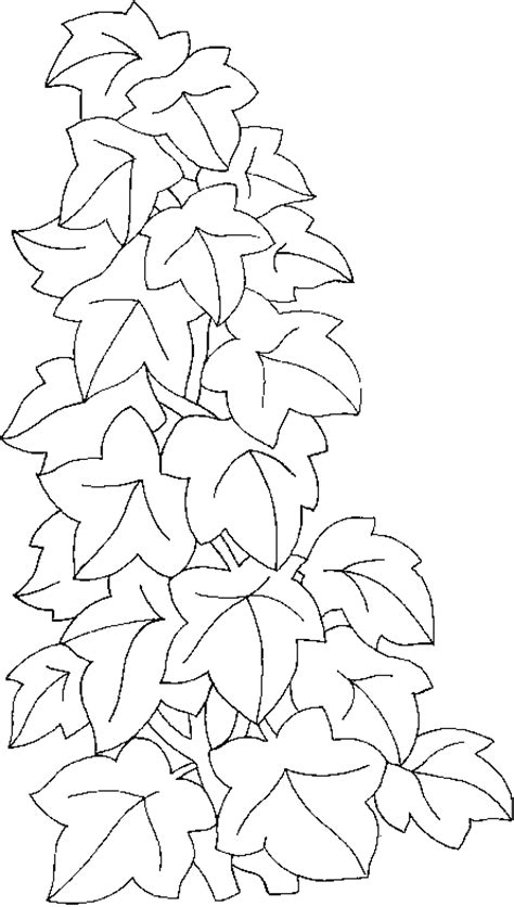 ivy leaves coloring page coloring climbing ivy picture