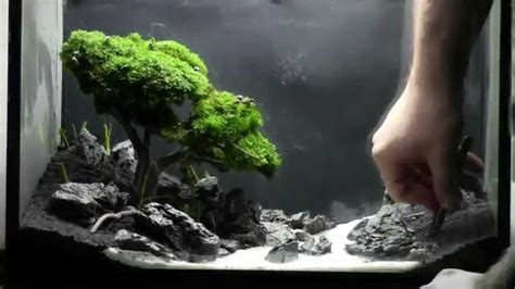bonsai aquascape bonsai aquarium acquario bonsai step by step youtube