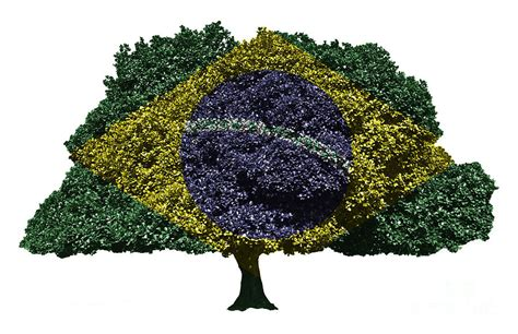 Kid Duvet Covers Brazilian Flag Tree Digital Art By Image World
