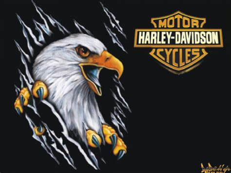 eagle tattoo hd wallpaper 8503 harley davidson eagle harley logo 1920x1080