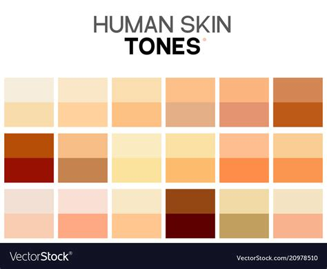 melanin skin color skin tone color chart human skin texture color vector image