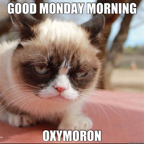 Grumpy Cat Monday Meme - good morning grumpy cat meme