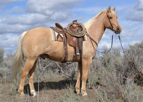 Tas Palomino Made In 878 best lets ride images on