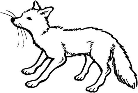 Arctic Fox Coloring Page animal jam arctic fox coloring pages coloring pages