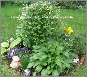 Pflegeleichte Blumen Garten by Blumen Garten Parade Aufgabe 7
