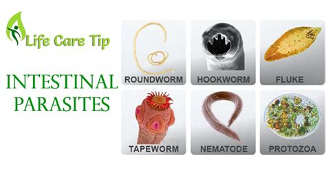 how to get rid of intestinal parasites